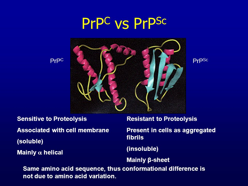 PrPC vs PrPSc PrPC PrPSc Sensitive to Proteolysis