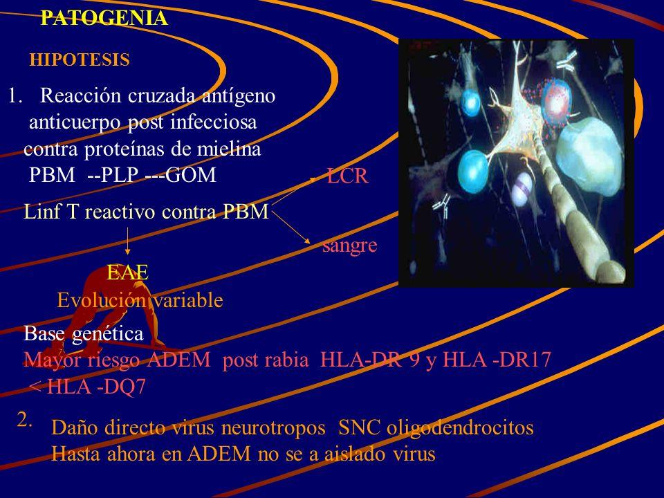 Reacción cruzada antígeno anticuerpo post infecciosa