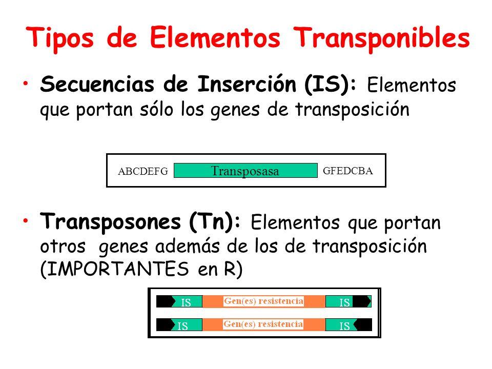 Tipos de Elementos Transponibles