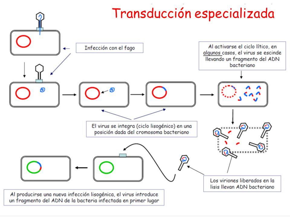 Transducción especializada