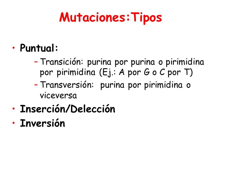 Mutaciones:Tipos Puntual: Inserción/Delección Inversión
