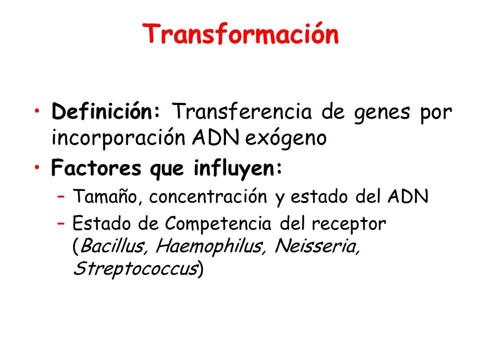 Transformación Definición: Transferencia de genes por incorporación ADN exógeno. Factores que influyen: