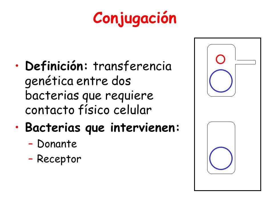 Conjugación Donor. Definición: transferencia genética entre dos bacterias que requiere contacto físico celular.