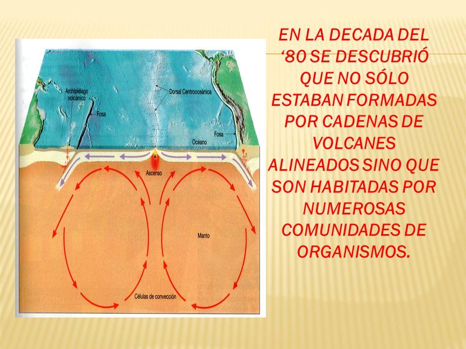 COMUNIDADES DE ORGANISMOS.