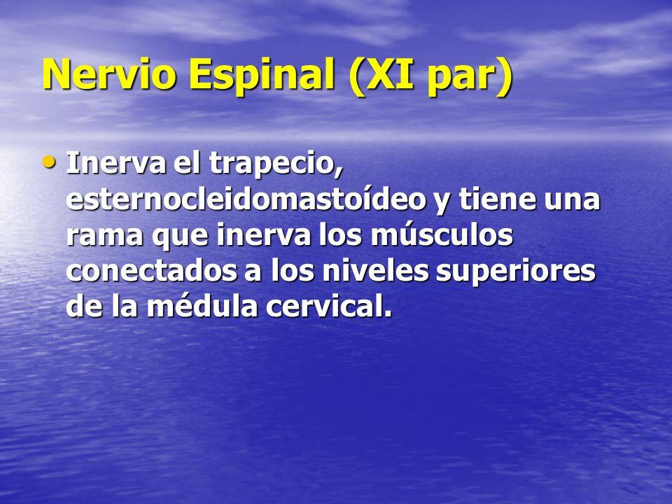 Nervio Espinal (XI par)