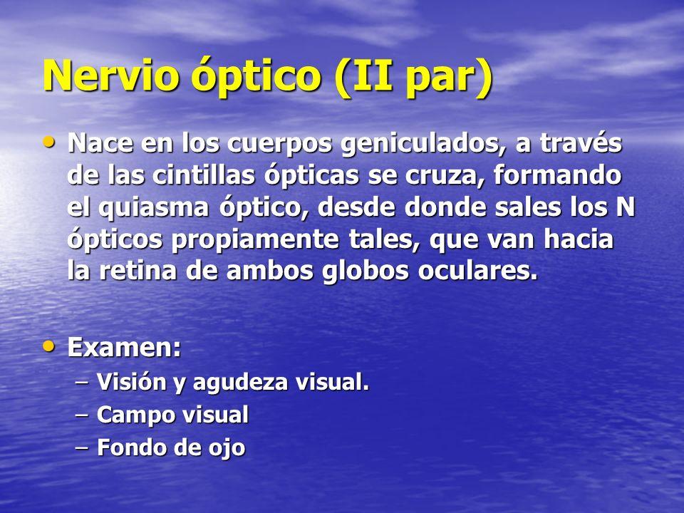 Nervio óptico (II par)