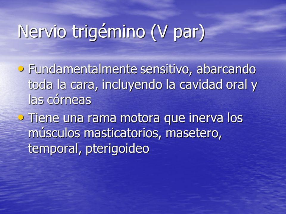 Nervio trigémino (V par)