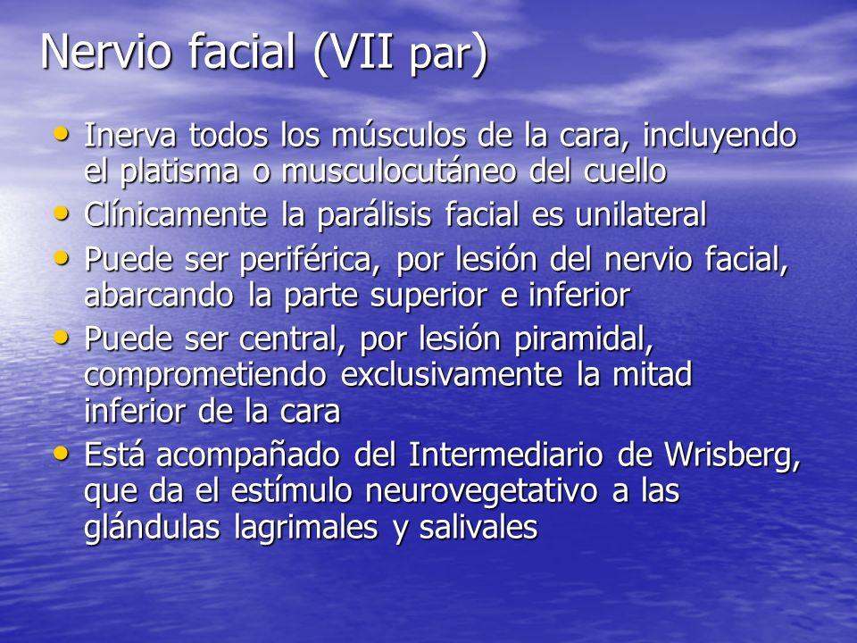 Nervio facial (VII par)