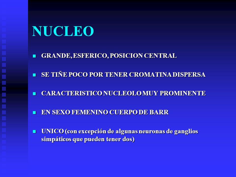 NUCLEO GRANDE, ESFERICO, POSICION CENTRAL