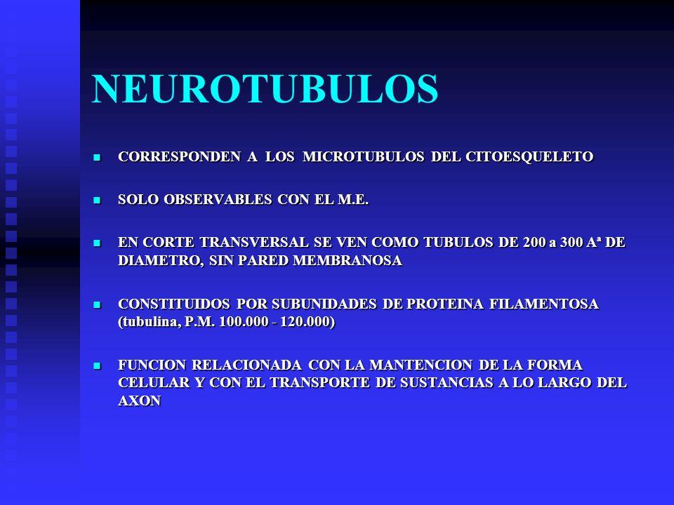 NEUROTUBULOS CORRESPONDEN A LOS MICROTUBULOS DEL CITOESQUELETO