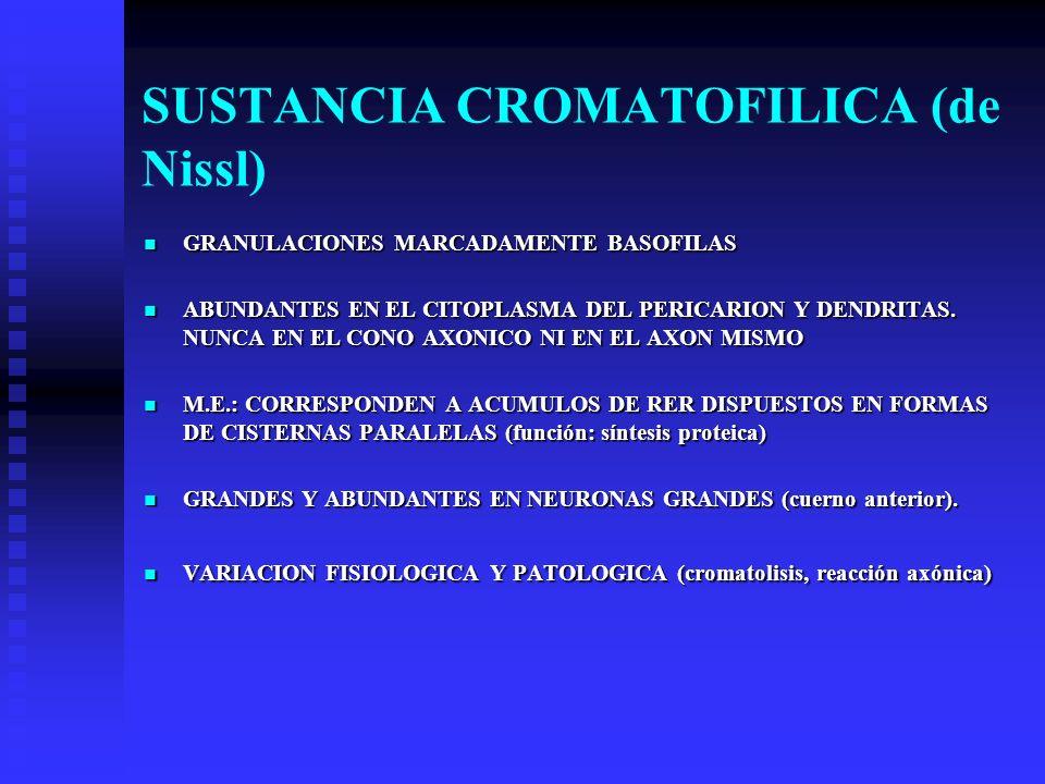 SUSTANCIA CROMATOFILICA (de Nissl)