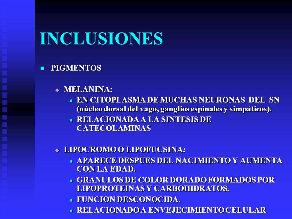 INCLUSIONES PIGMENTOS MELANINA: