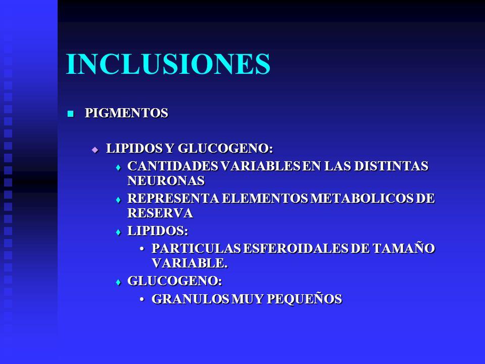 INCLUSIONES PIGMENTOS LIPIDOS Y GLUCOGENO: