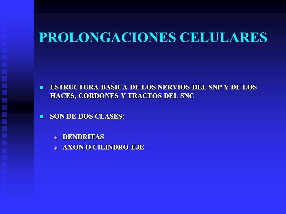 PROLONGACIONES CELULARES