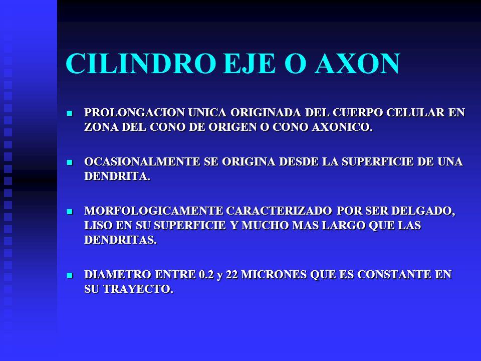 CILINDRO EJE O AXON PROLONGACION UNICA ORIGINADA DEL CUERPO CELULAR EN ZONA DEL CONO DE ORIGEN O CONO AXONICO.
