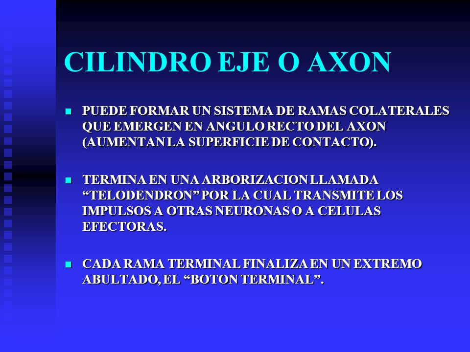 CILINDRO EJE O AXON PUEDE FORMAR UN SISTEMA DE RAMAS COLATERALES QUE EMERGEN EN ANGULO RECTO DEL AXON (AUMENTAN LA SUPERFICIE DE CONTACTO).
