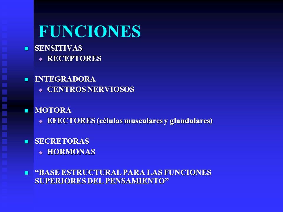 FUNCIONES SENSITIVAS RECEPTORES INTEGRADORA CENTROS NERVIOSOS MOTORA