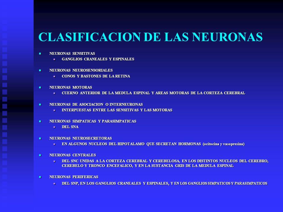 CLASIFICACION DE LAS NEURONAS