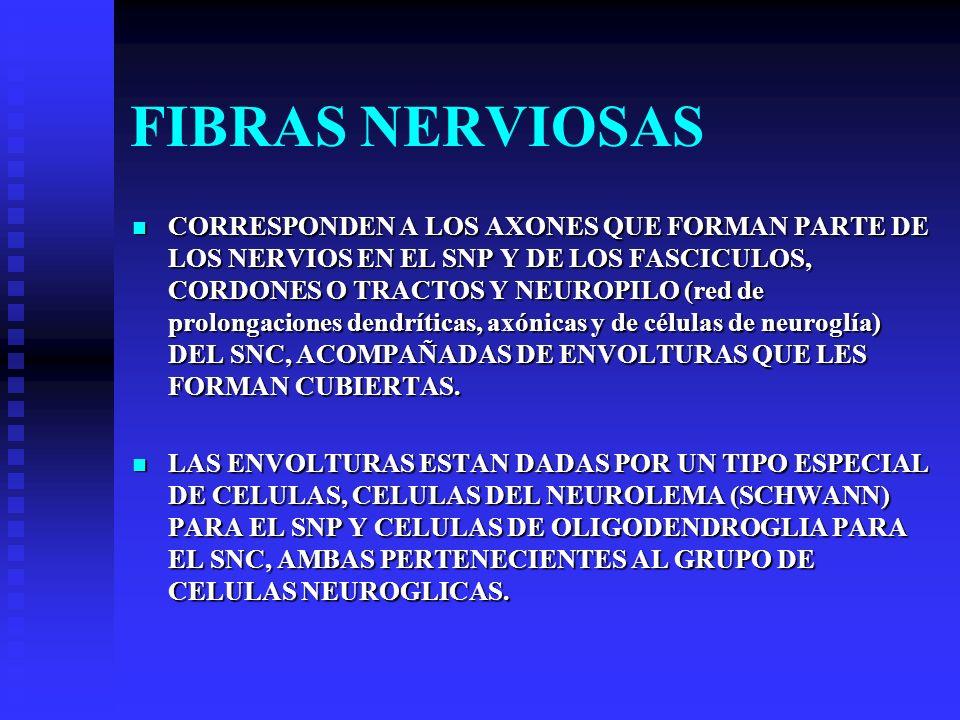 FIBRAS NERVIOSAS