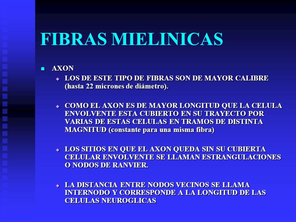 FIBRAS MIELINICAS AXON