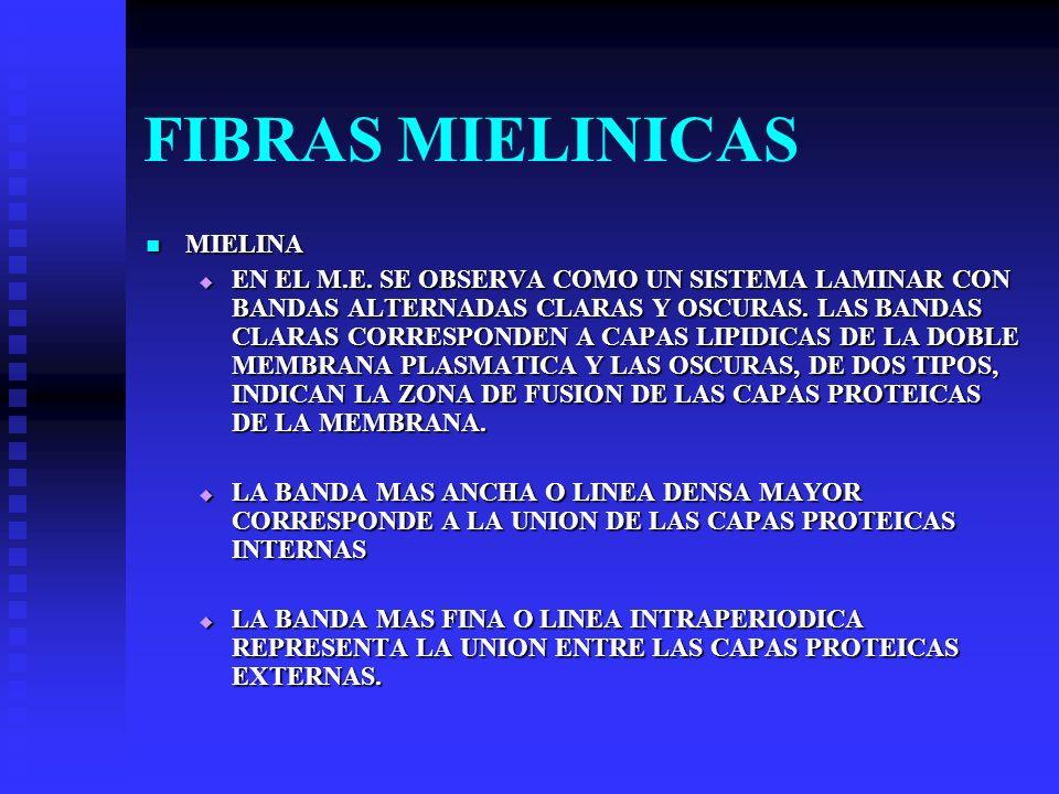 FIBRAS MIELINICAS MIELINA