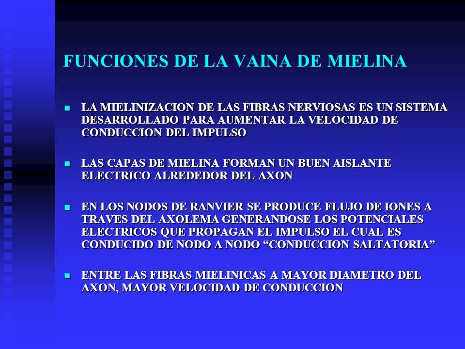 FUNCIONES DE LA VAINA DE MIELINA