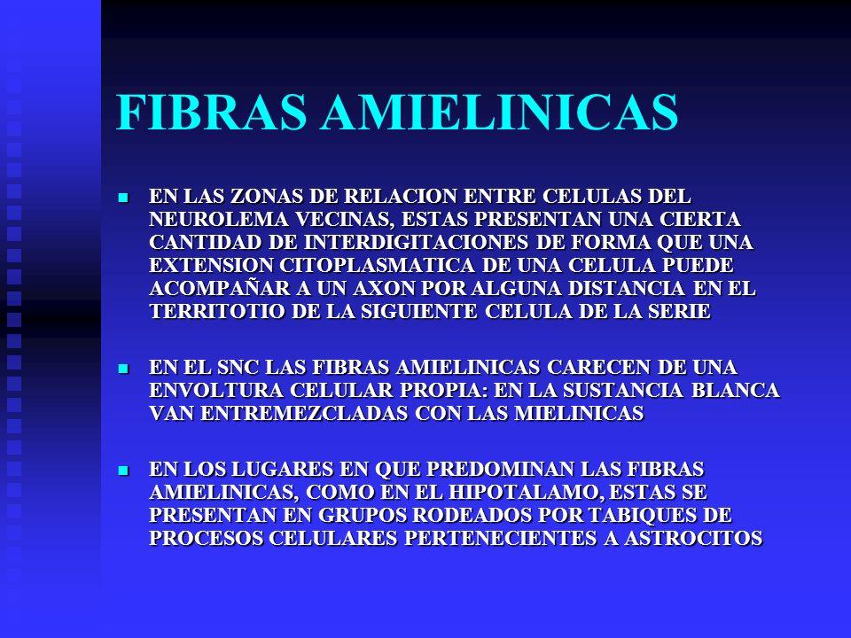 FIBRAS AMIELINICAS