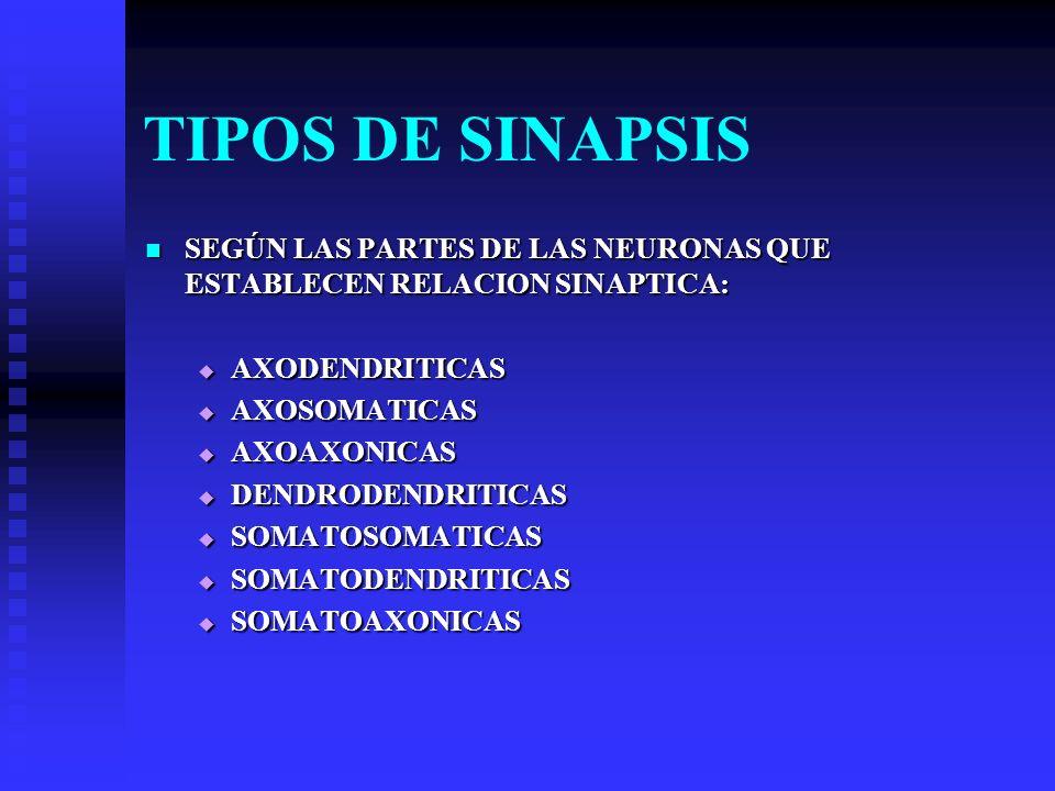 TIPOS DE SINAPSIS SEGÚN LAS PARTES DE LAS NEURONAS QUE ESTABLECEN RELACION SINAPTICA: AXODENDRITICAS.