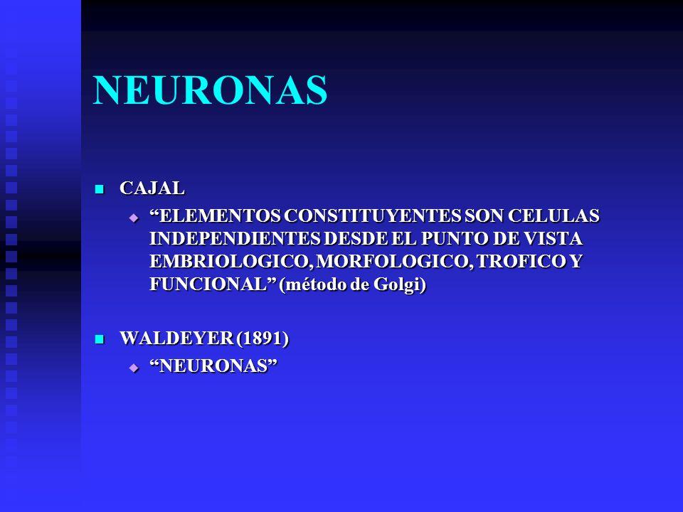 NEURONAS CAJAL.