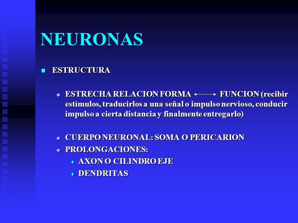 NEURONAS ESTRUCTURA.