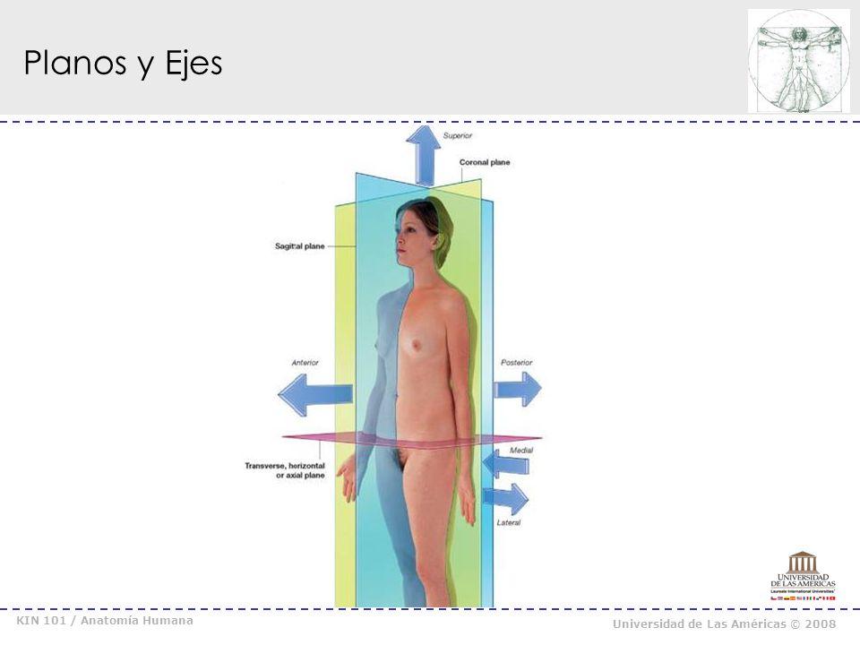 Planos y Ejes KIN 101 / Anatomía Humana