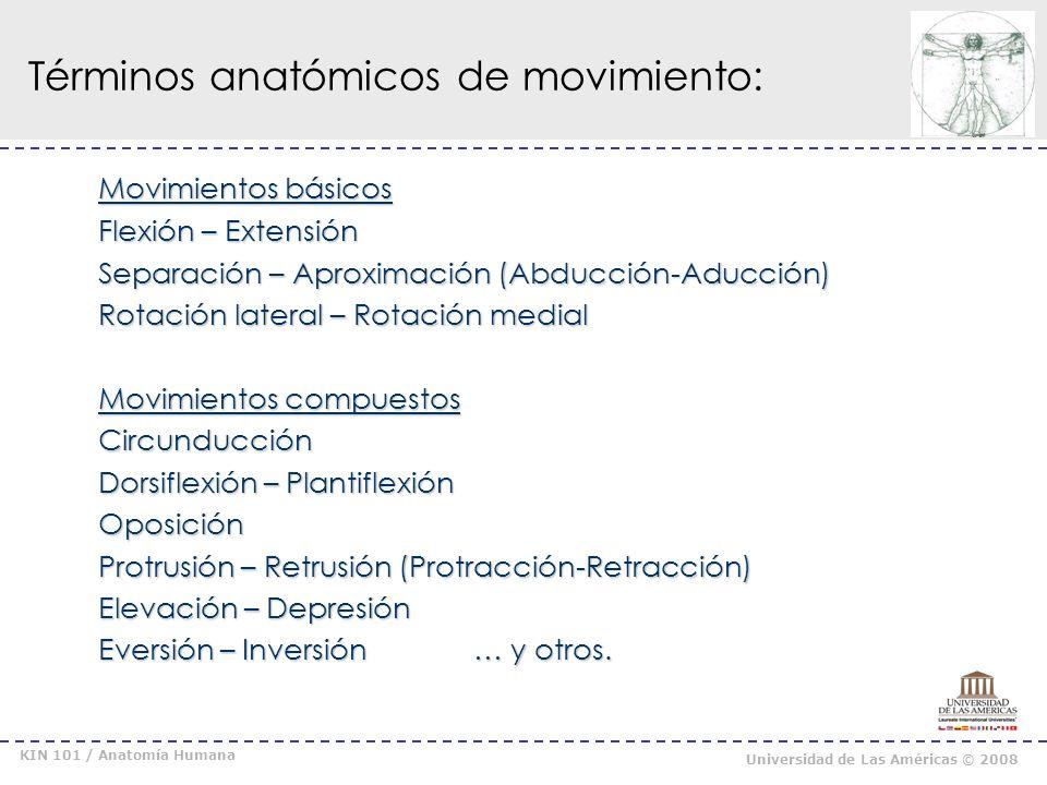 Términos anatómicos de movimiento: