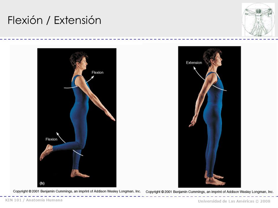 Flexión / Extensión KIN 101 / Anatomía Humana