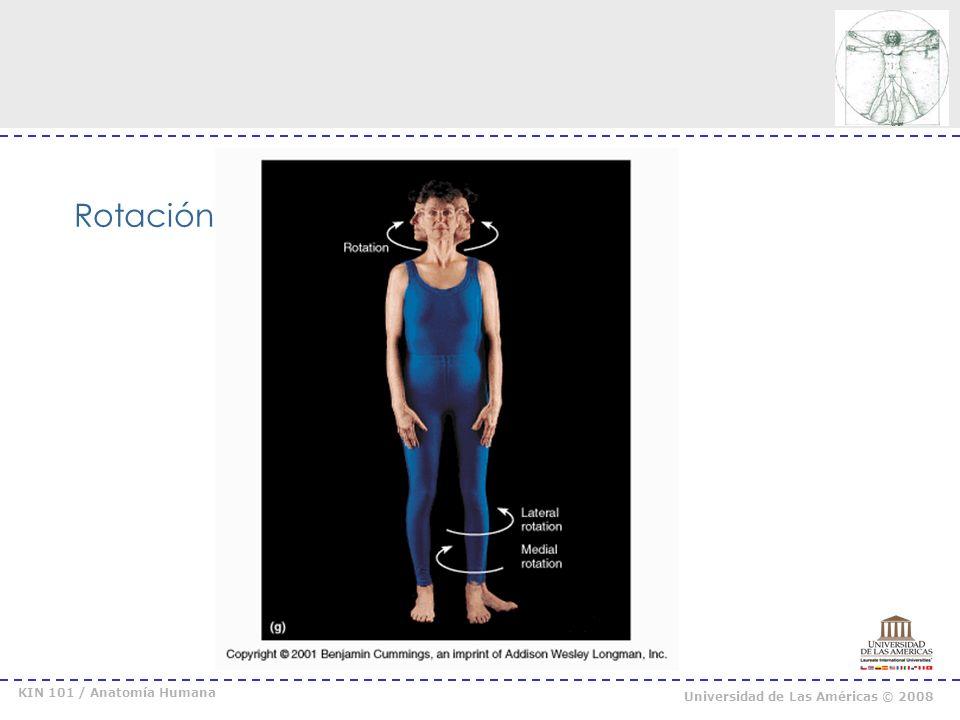 Rotación KIN 101 / Anatomía Humana Universidad de Las Américas © 2008