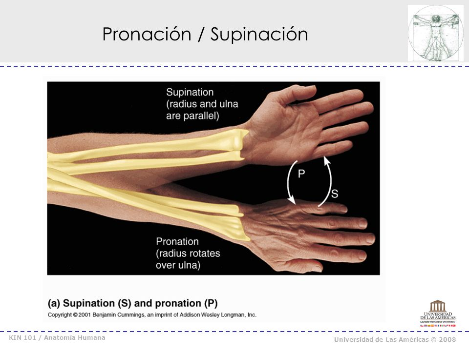 Pronación / Supinación