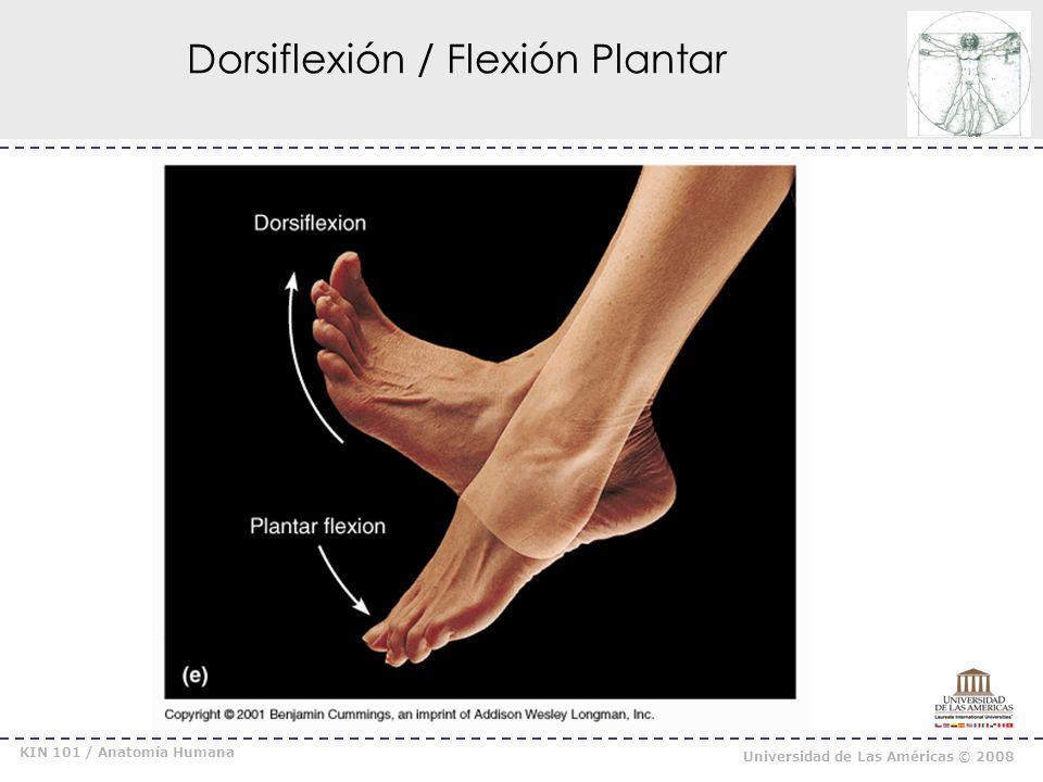 Dorsiflexión / Flexión Plantar