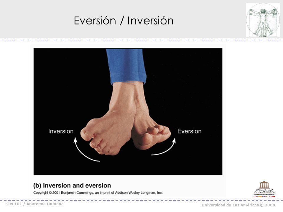 Eversión / Inversión KIN 101 / Anatomía Humana