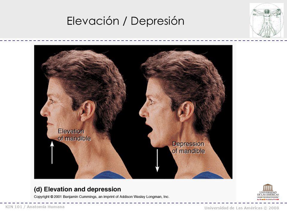 Elevación / Depresión KIN 101 / Anatomía Humana