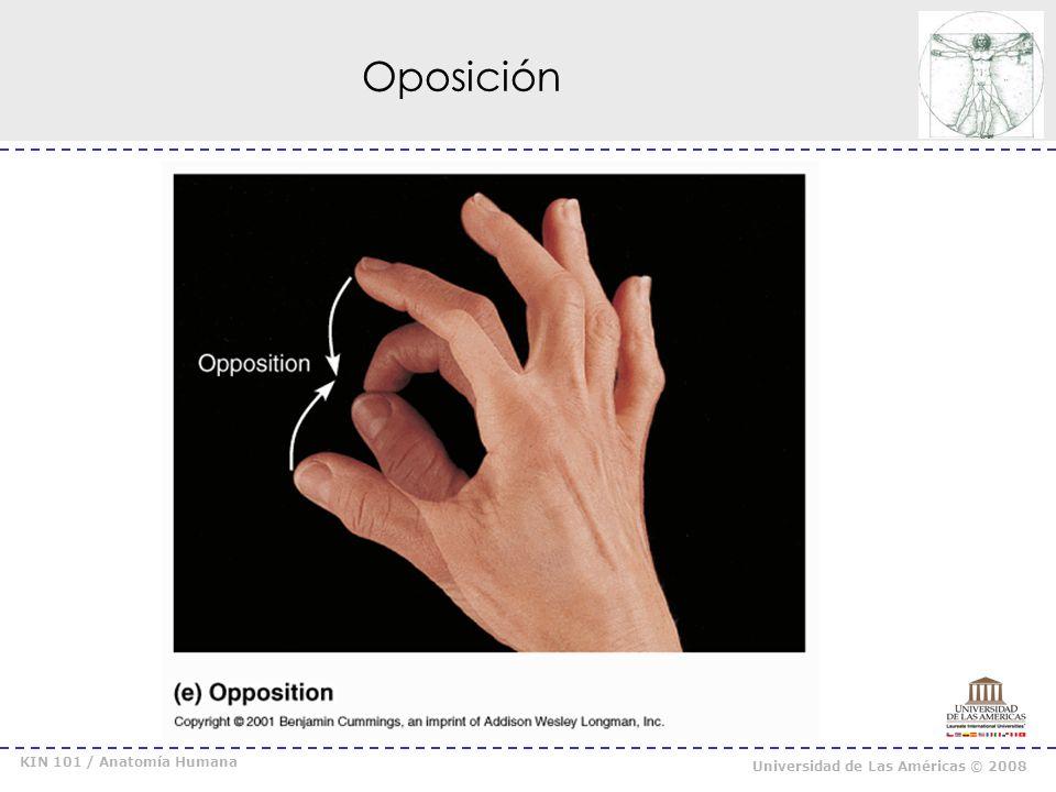 Oposición KIN 101 / Anatomía Humana Universidad de Las Américas © 2008