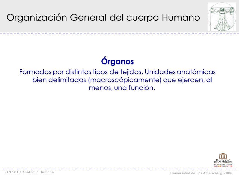 Organización General del cuerpo Humano