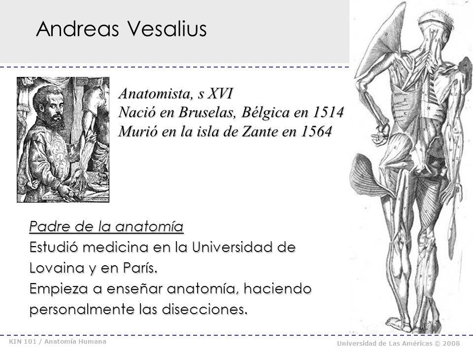 Andreas Vesalius Anatomista, s XVI Nació en Bruselas, Bélgica en 1514