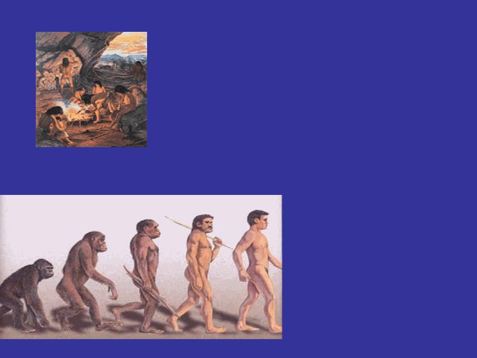 Vivían en comunidades nómades tribales (caza, recolección y pesca)