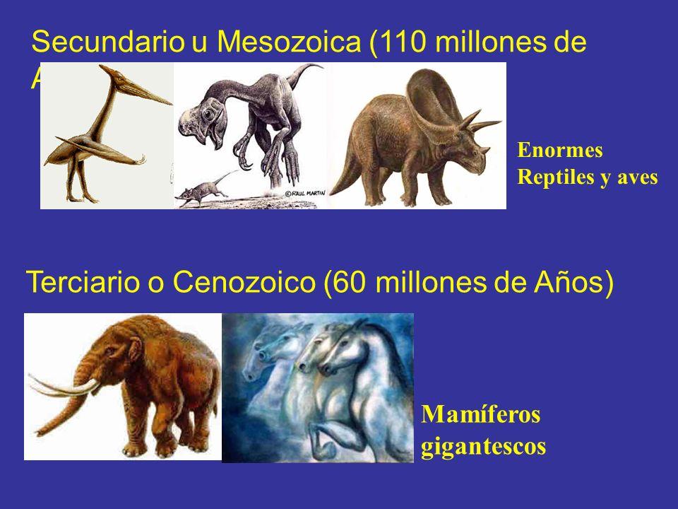 Secundario u Mesozoica (110 millones de Años)
