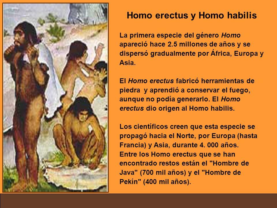 Homo erectus y Homo habilis