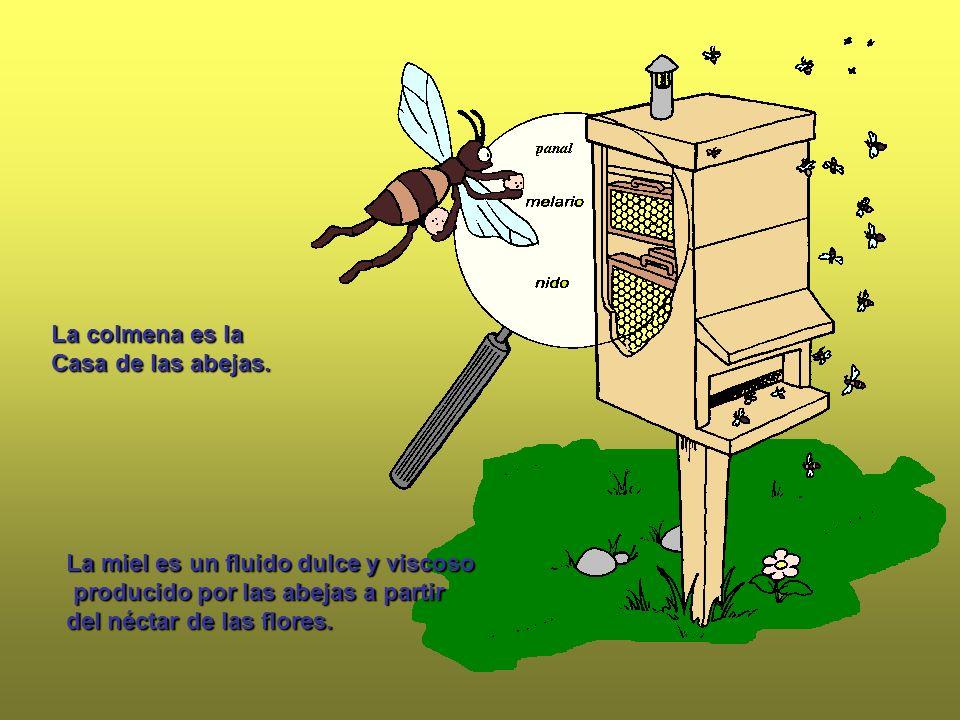 La colmena es la Casa de las abejas. La miel es un fluido dulce y viscoso. producido por las abejas a partir.