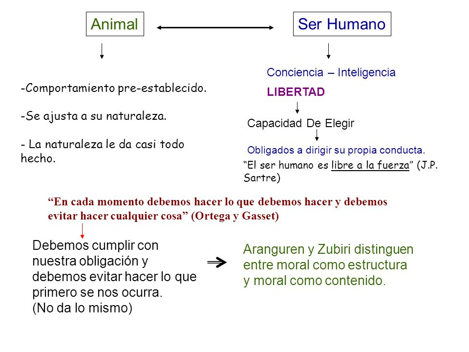 Animal Ser Humano. Conciencia – Inteligencia. LIBERTAD. Capacidad De Elegir. Obligados a dirigir su propia conducta.