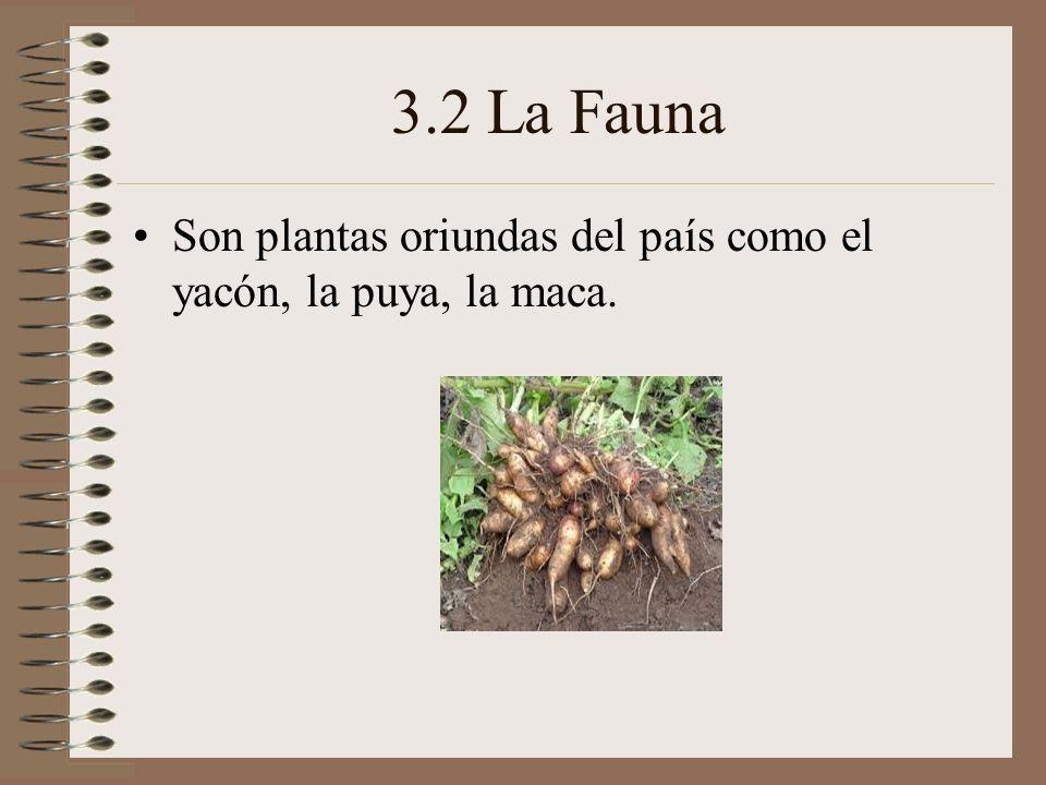 3.2 La Fauna Son plantas oriundas del país como el yacón, la puya, la maca.