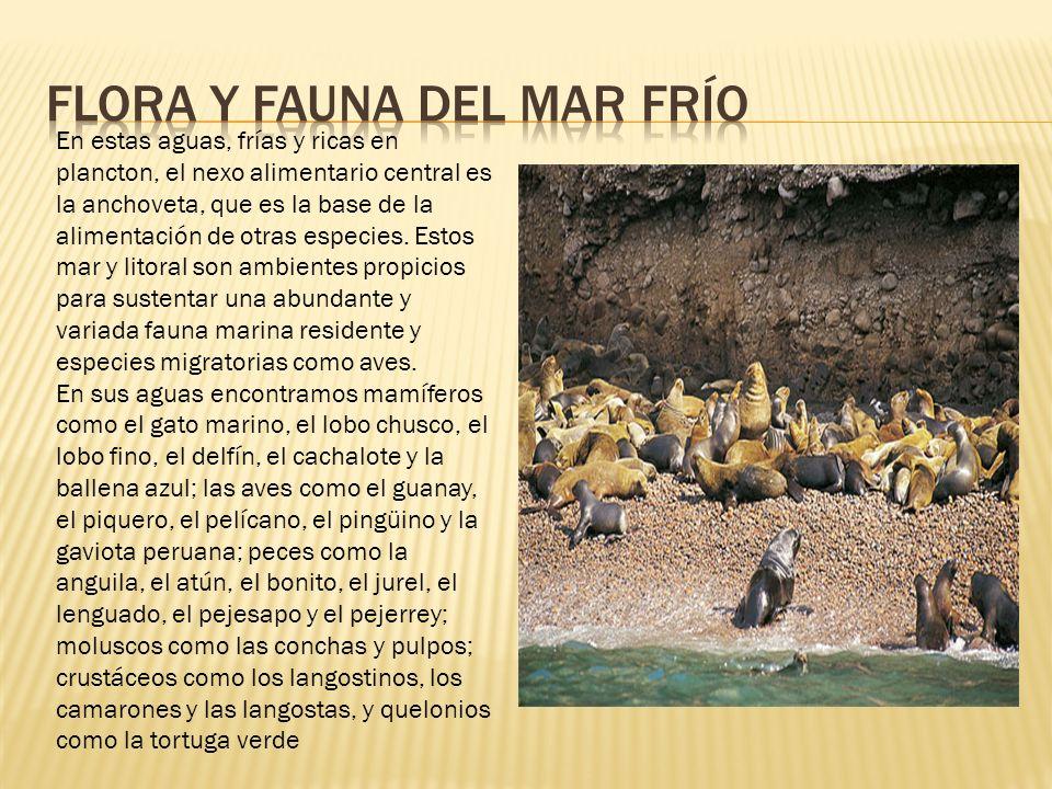 FLORA Y FAUNA DEL MAR FRÍO