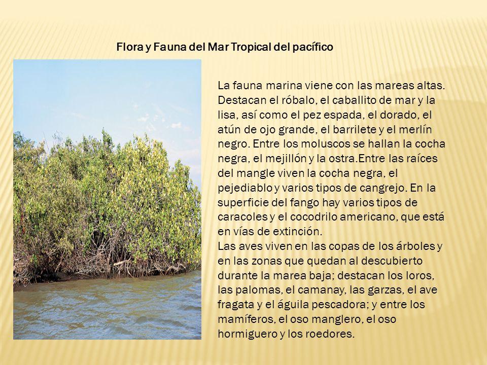 Flora y Fauna del Mar Tropical del pacífico