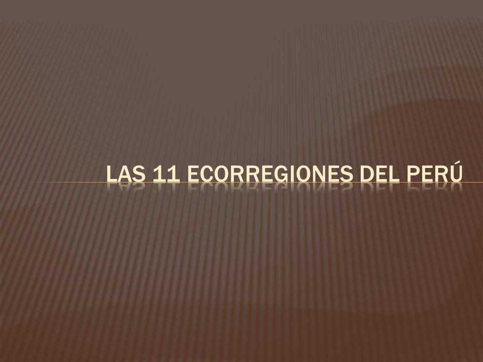 Las 11 ecorregiones del Perú